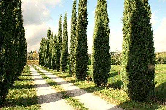 tuscany-landscape4