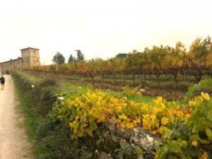 tuscany-landscape5