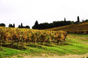 tuscany-lanscape11